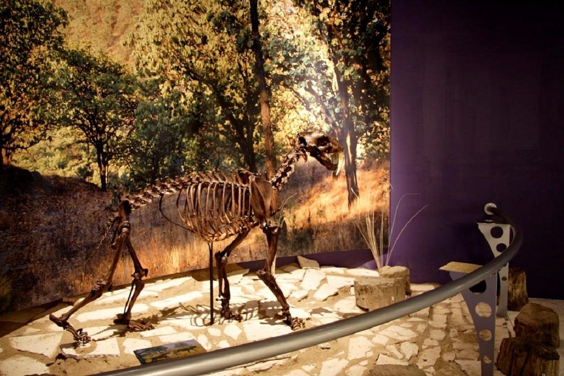 Vista de un esqueleto en el Museo de Paleontología