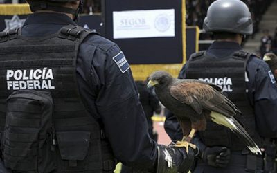 LLAMAN A GARANTIZAR DERECHOS DE POLICÍAS FEDERALES